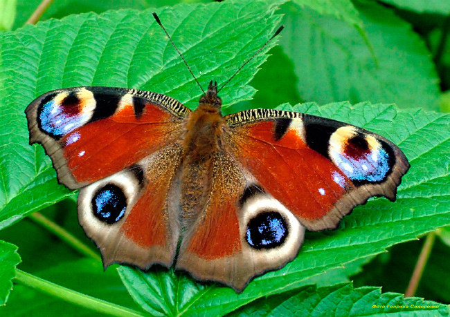 Книга Зеленые страницы рассказ Первые бабочки где