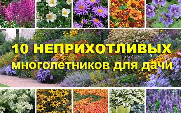 Многолетники дачные цветы