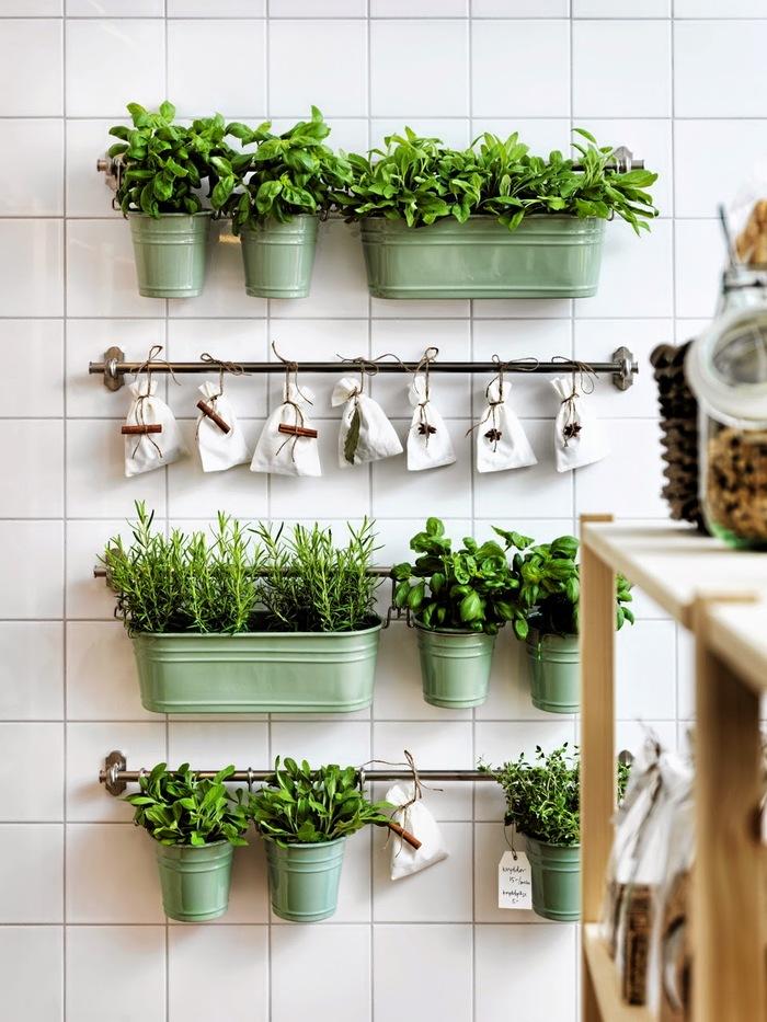 8 трав, которые можно вырастить на кухонном подоконнике 82