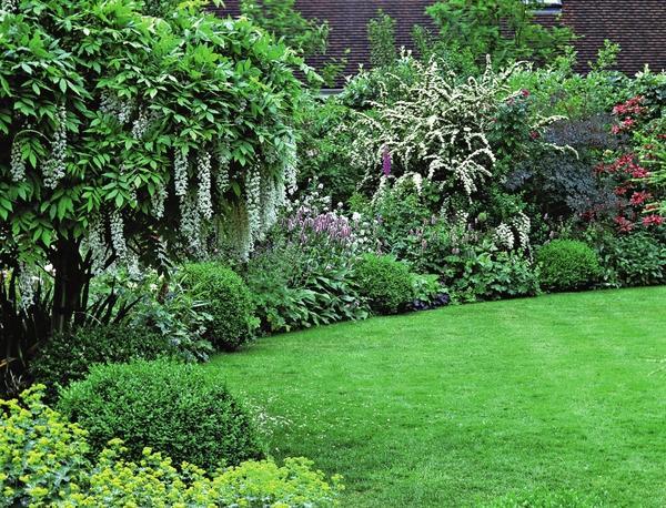 Красивые декоративные кустарники для сада фото