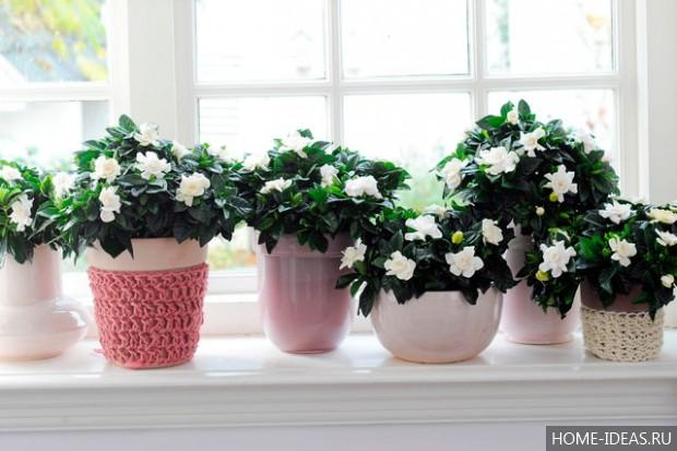 Домашние цветы неприхотливые цветущие