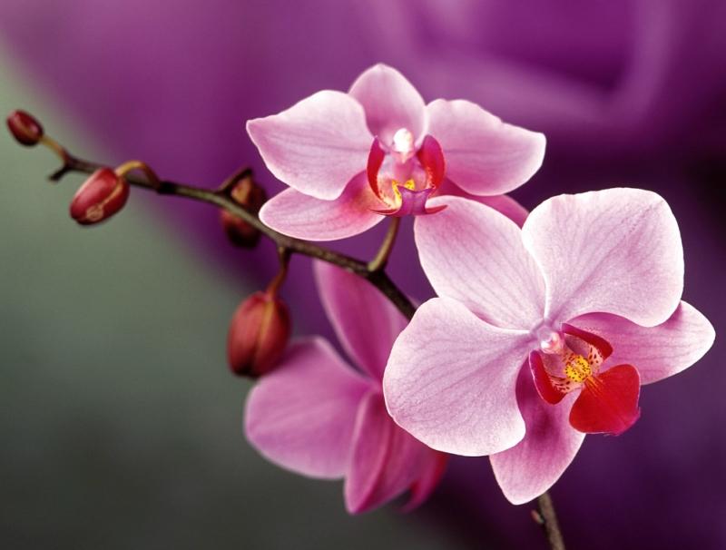 Просто фото красивых цветов