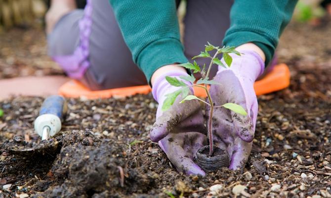 Как правильно садят или сажают овощи 95