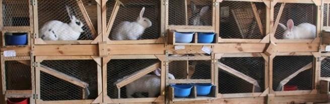 для кроликов руками своими металлическая кормушка