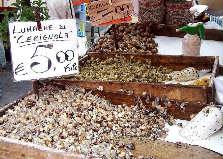 Условия для выращивания улиток 499