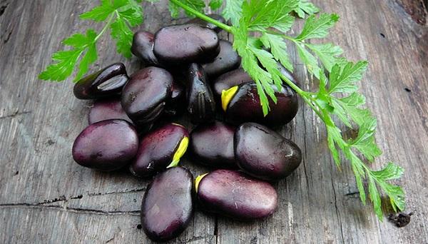 Фасоль чёрная выращивание 18