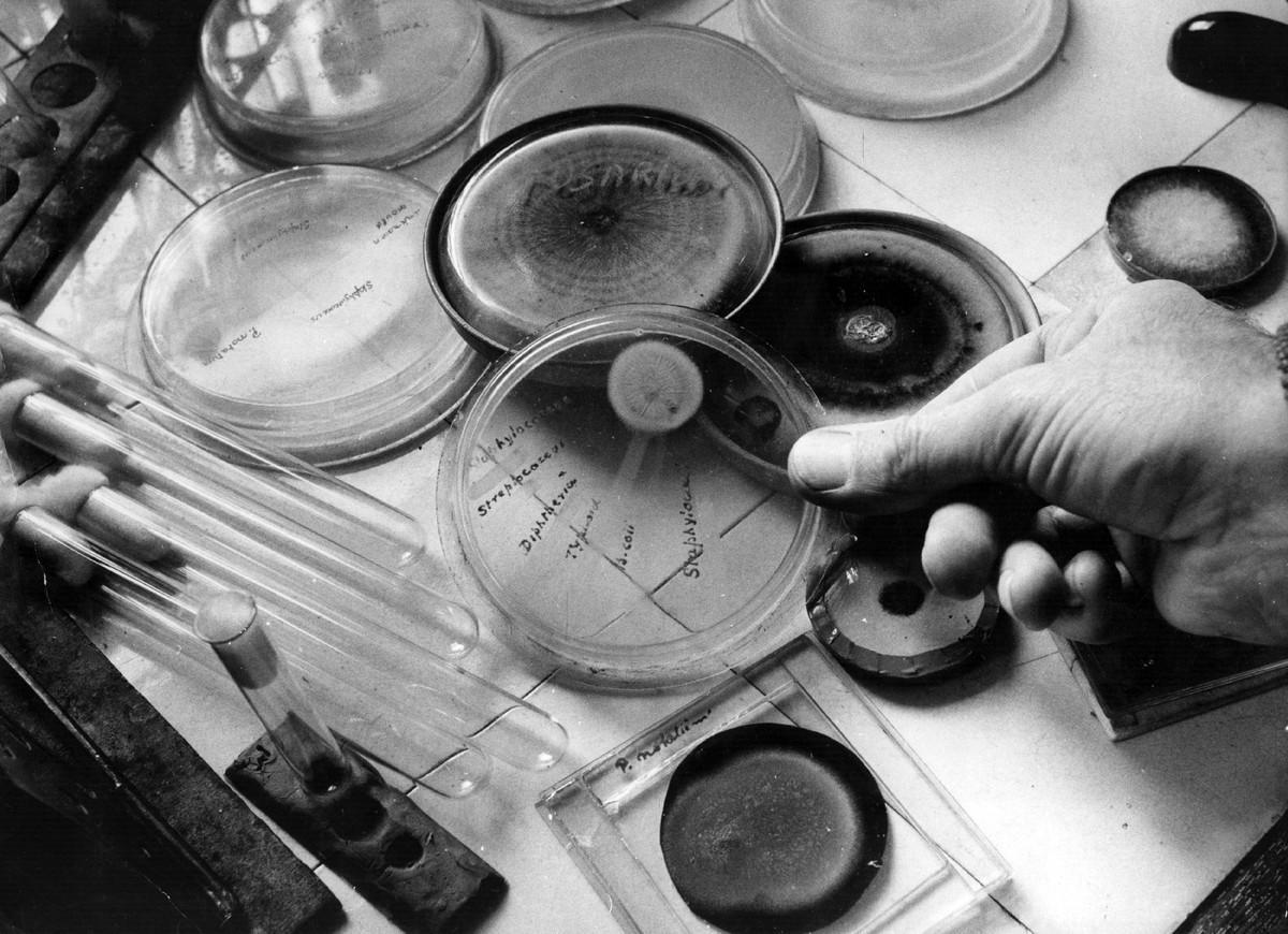 alexander fleming 1 Aunque generalmente se atribuye a alexander fleming el descubrimiento de la penicilina, muchas épocas y culturas diferentes llegaron mediante la observación y la experiencia a conocer y emplear las propiedades bactericidas de los mohos.