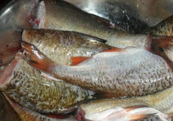Как в домашних условиях приготовить рыбные консервы
