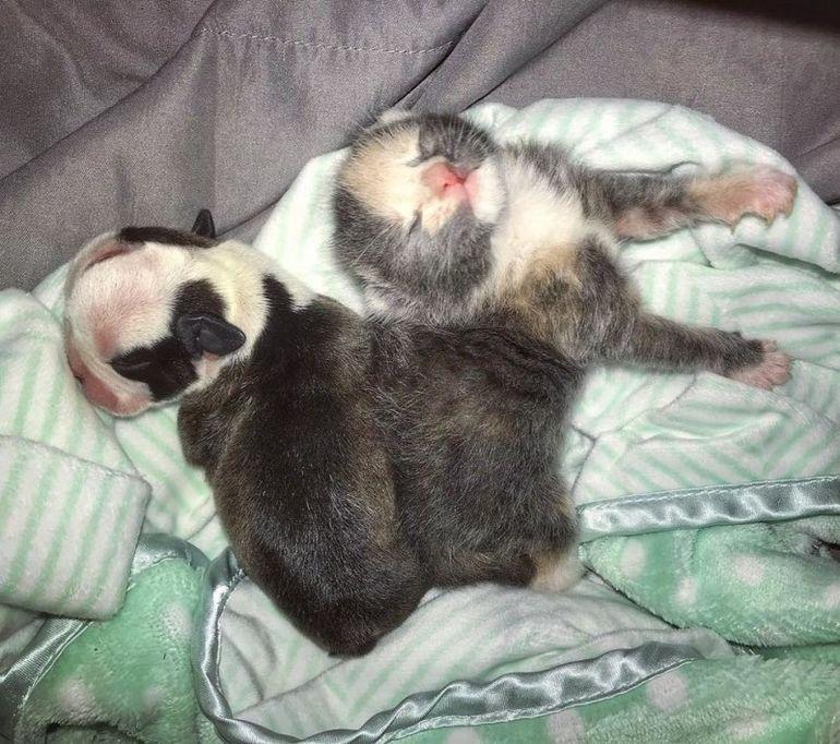 Осиротевший котенок и спасенный щенок стали друг другу как