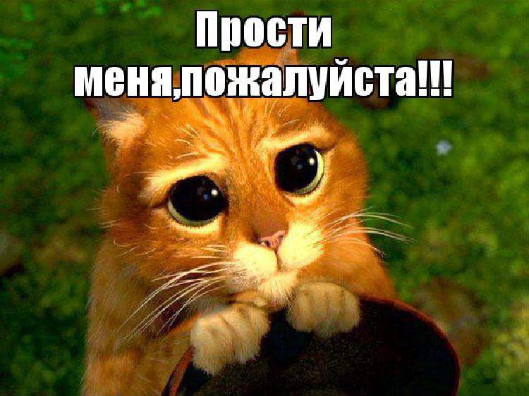 фото как котик извиняется для частных