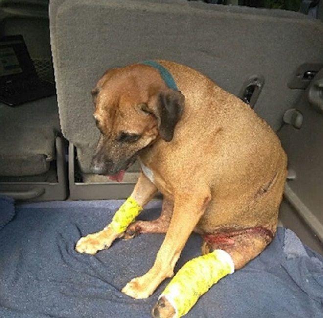 Когда пес увидел, что случилось с его маленькой хозяйкой, ничто не могло его удержать новые фото