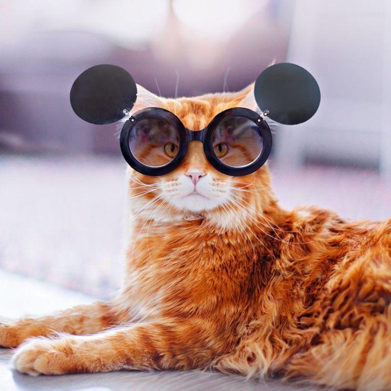 Смешные картинки кошек в очках