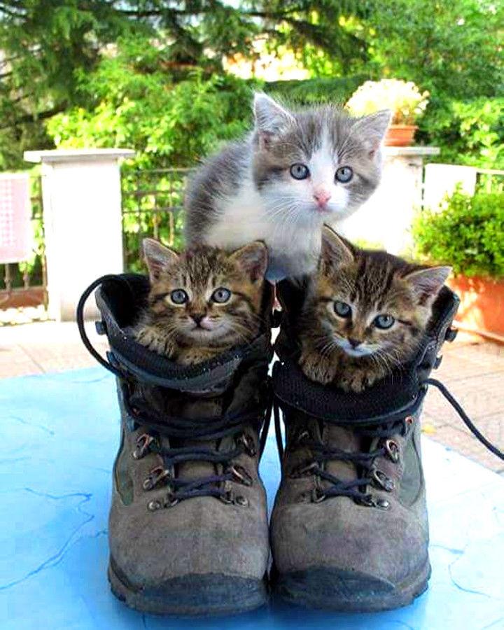 Смешные картинки котов и котенка