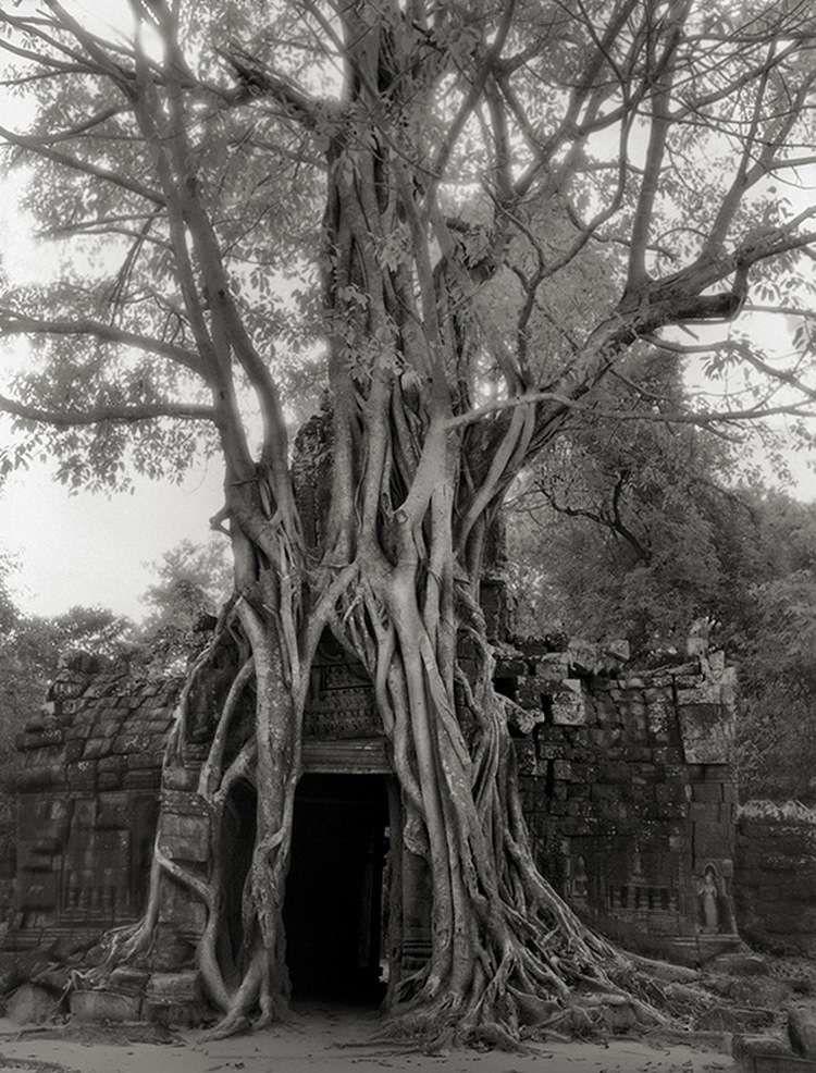 картинки самых старых деревьев на земле обозначения том
