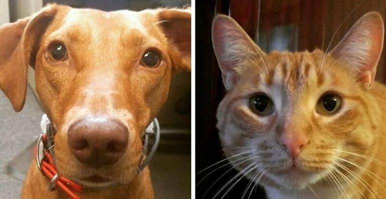 Женщина проверила, что делают кот и собака, когда её нет дома