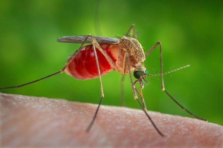 Картинки по запросу Эти 8 запахов заставят комара отказаться от вашей крови