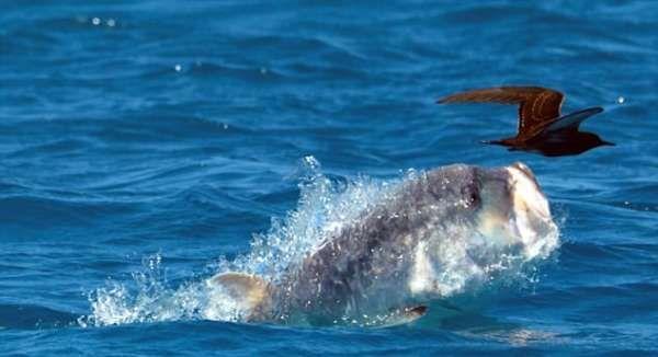 рыба птица фото