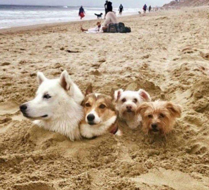 Смешная картинка с пляжа