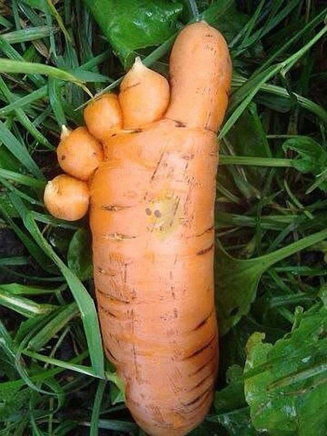 Прикольные картинки морковка