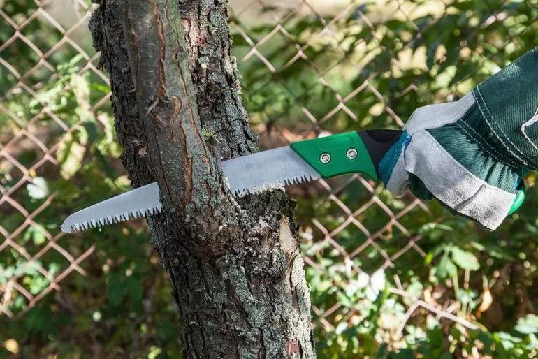 Что делать, если соседские деревья затеняют ваш участок?