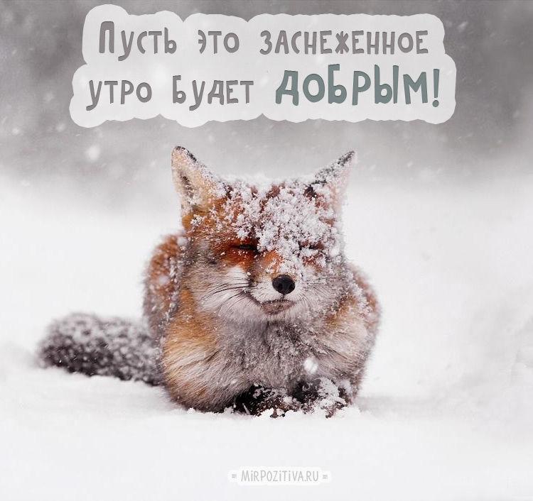 Зимние приколы картинки с надписями с добрым утром
