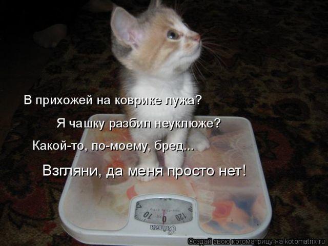 Смешные котики, чтоб смеяться до икотки. Уморительная фото-подборка!