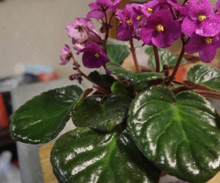 Минералка для домашних растений