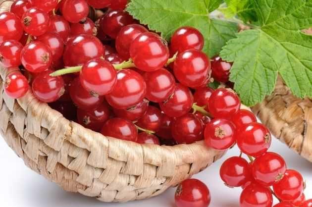 Красная смородина – любимица дачников