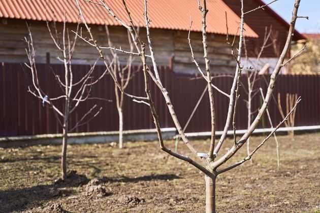 Планирование плодового сада: как избежать ошибок