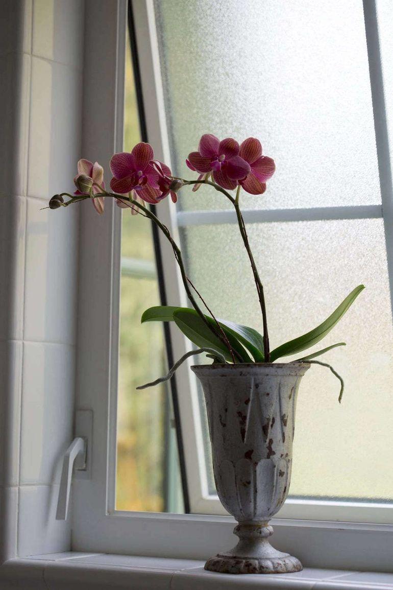 Удивительные факты об орхидеях