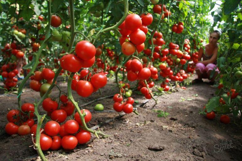 Волшебный бальзам для роста помидоров!
