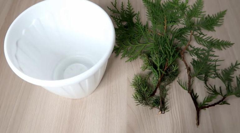 Простой способ укоренения растений