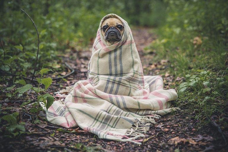 Приобретение одеял оптом от производителя