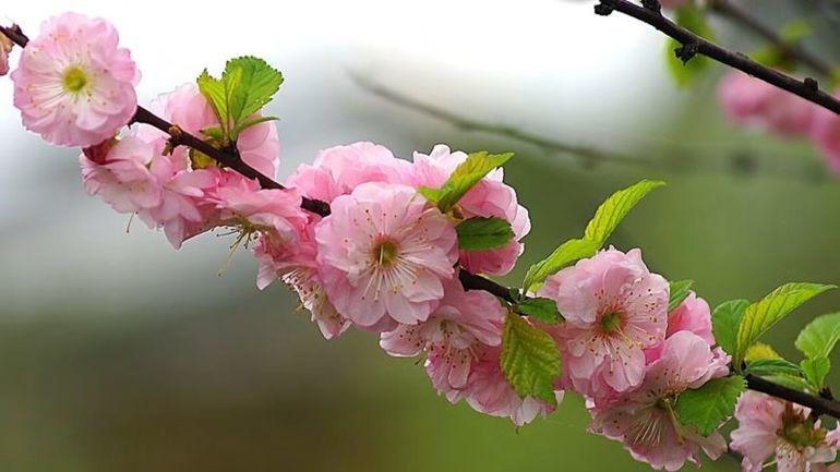 ТОП-5 отличных кустарника, которые очень красиво цветут