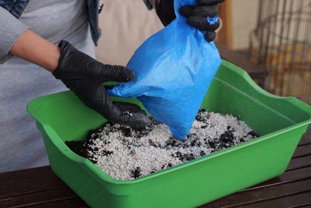 3 ситуации, когда подкармливать рассаду нельзя