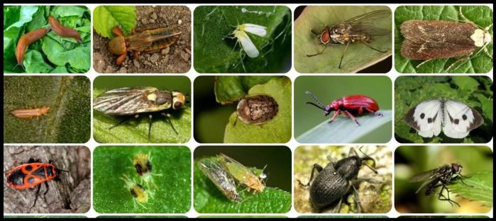 Семь главных огородных вредителей и как с ними бороться