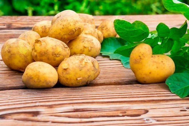 Характеристики сортов картофеля белорусской селекции