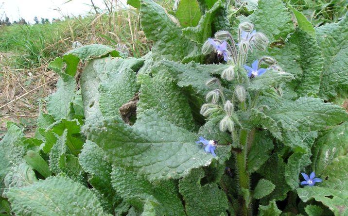 Отличные растения для клубники