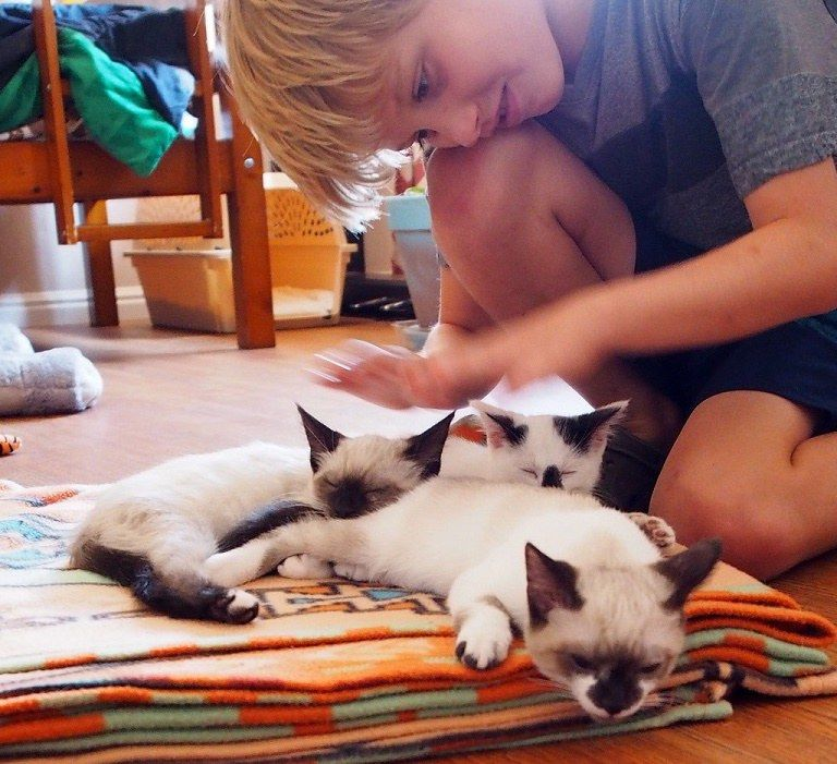как знакомить котенка с собакой