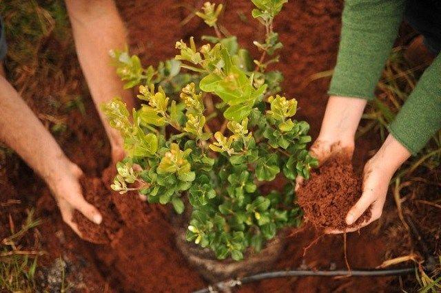 Пересадка деревьев и кустарников