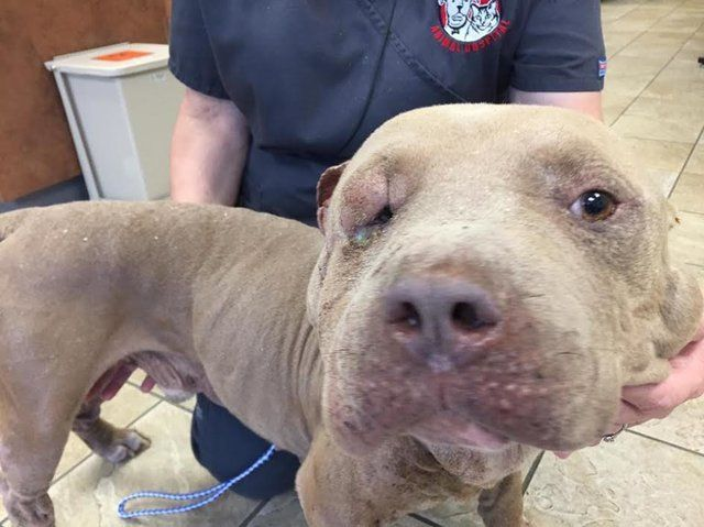 euthanasia of dogs Deciding when to let your pet go is a difficult decision we provide humane pet euthanasia and aftercare services to the public.