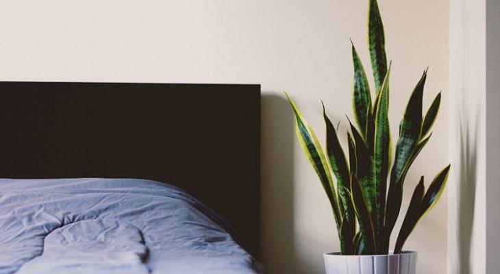 10 фактов про сон, которые полезно знать