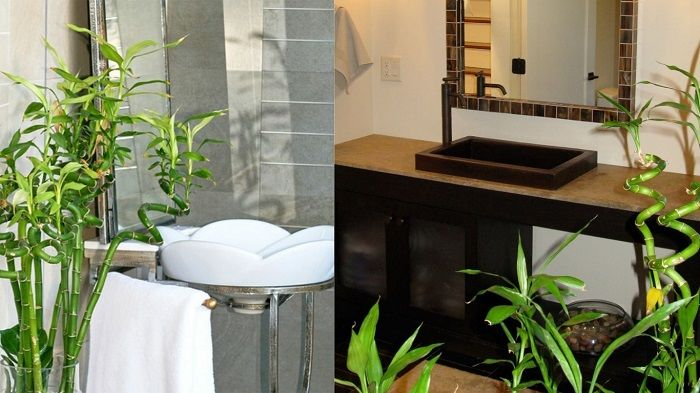 Какие цветы можно выращивать в ванной комнате без окна?