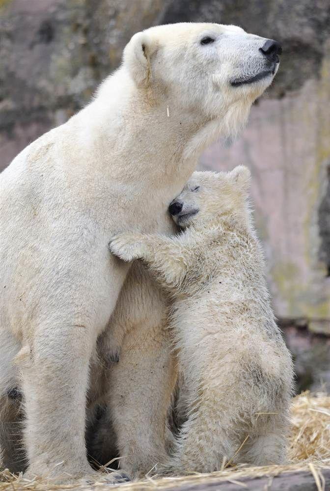 Открытки, мама и ребенок животные картинки