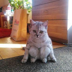 Поза в сексе кошачье танго