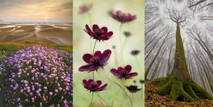 Конкурс «International Garden Photographer of the Year-2011»