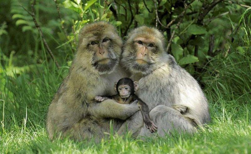Картинка семья животные прикольные, открытки день рождения