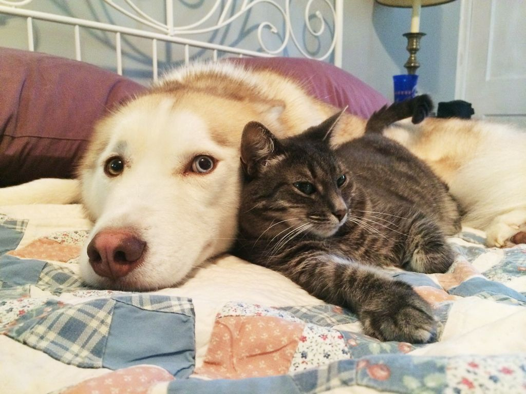 Картинки, все картинки смешных котов и собак