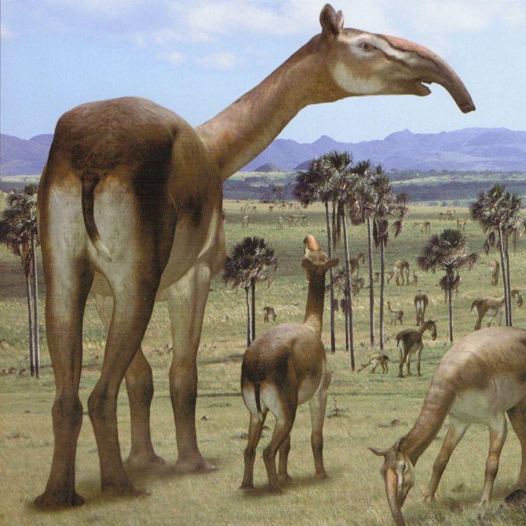 картинки с древними животными и растениями одной