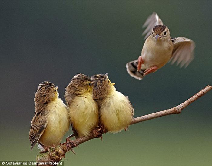 Картинка птенцы учатся летать